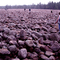 Boulder Field, Hickory Run State Park, Pennsylvania Anomaly From Glaciers Past