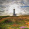 Yaquina Head Lighthouse with Wildflowers