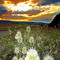Teasel Mountain Sunset