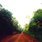 Road through the rainforest, northern Congo (approximate location)