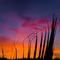 Tequila Sunrise - Phoenix, AZ - Tom Askew